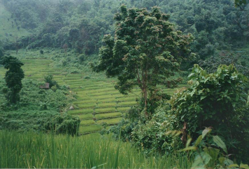 Rice paddies far below us