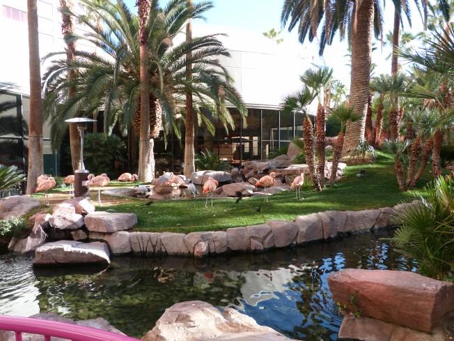 Flamingo Hotel garden