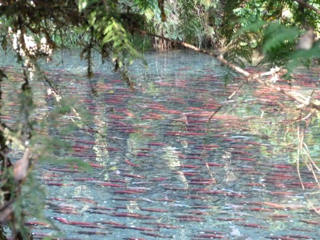 Meadow Creek Spawning Channel