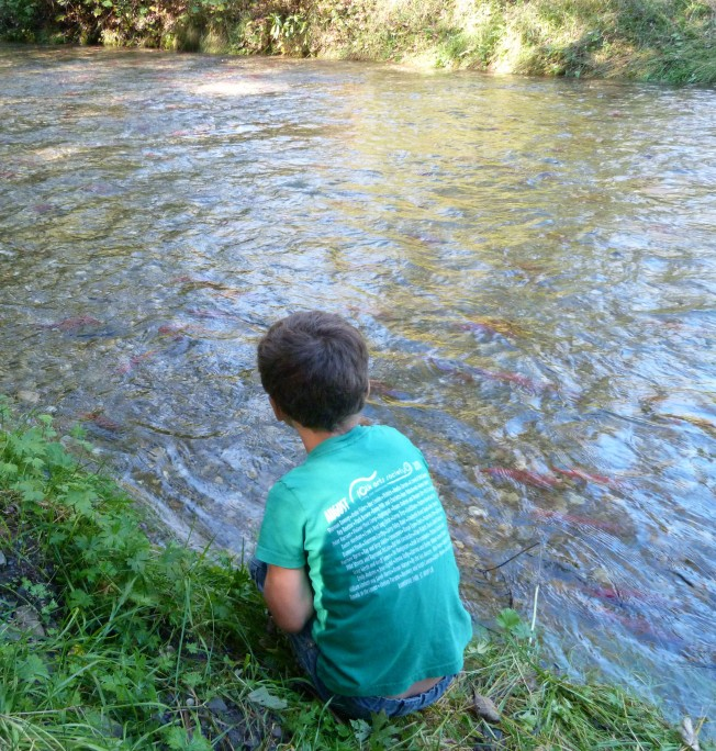 spawning channel