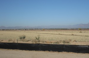 Desert Haze