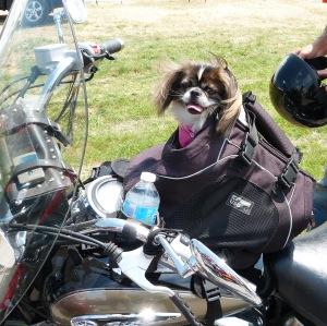 Biker Pup