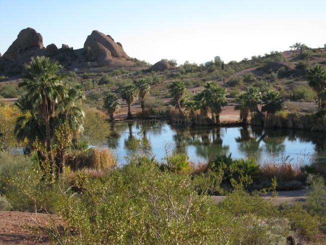 Papago Park Oasis