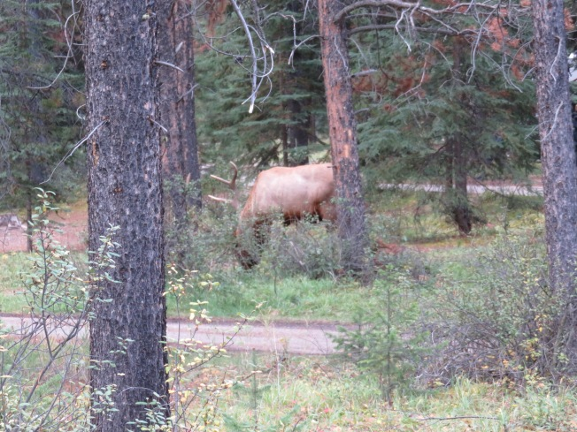 Glimpse of Elk