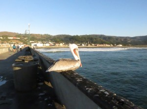 Birds on the Pier
