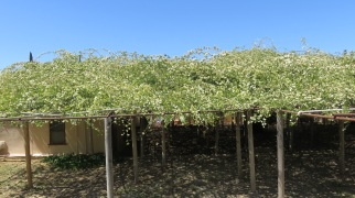 Branches spread over a well-supported trellis