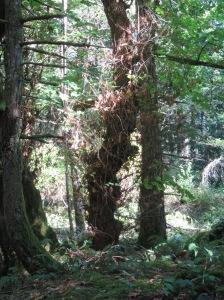 Helliwell Trail