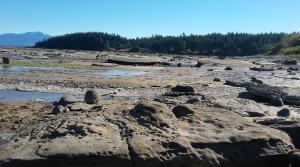 Rocky Sand Piper Beach