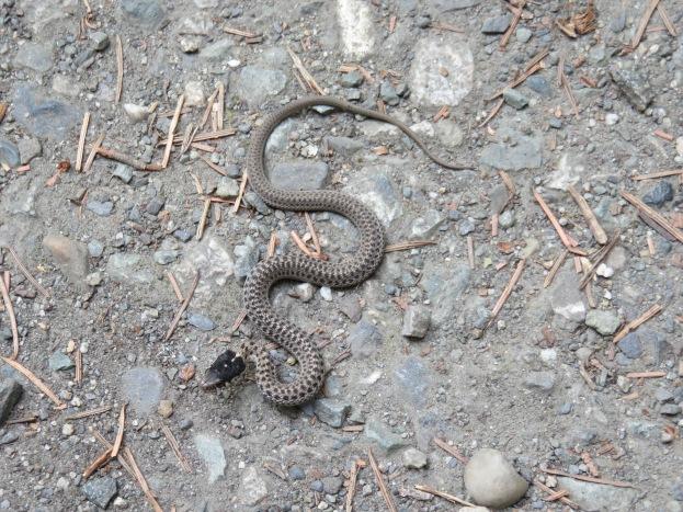 Callum found a snake