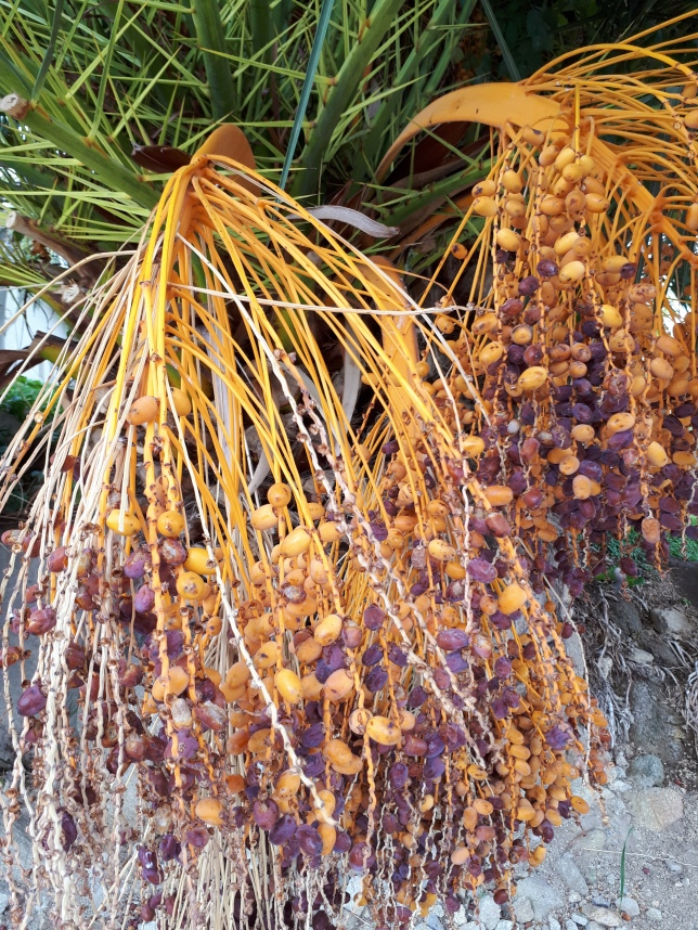 University of Texas El Paso Campus, plants