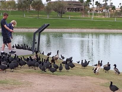 A new flock of strange birds