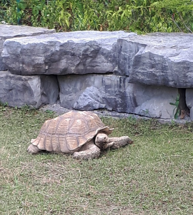 Tortoise at the Reptile Zoo