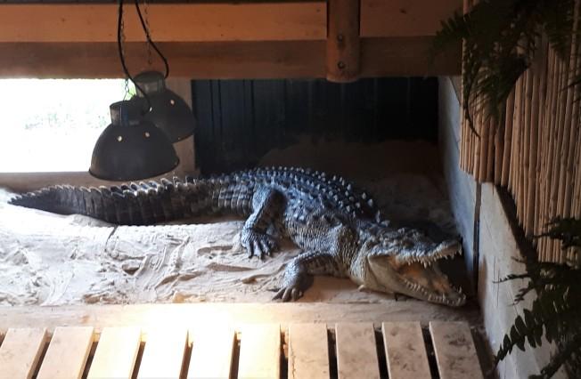 Crocodile at Reptile Zoo, Peterborough, Ontario